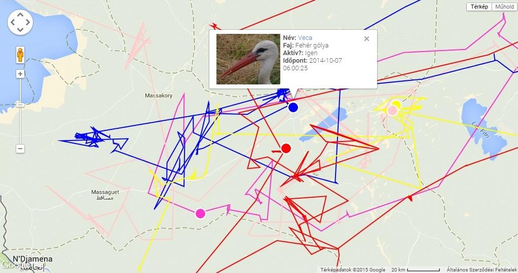 Az 5 fehér gólya elhelyezkedése 2014.10.07-én a Csád-tó és a Fitri-tó között; Veca kékkel, Horka lilával, Varbó szürkével, Natália pirossal, Hófogó sárgával jelölve (forrás: satellitetracking.eu)