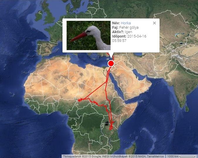 Horka útvonala, jeladója 2015.04.16-án elhallgatott (forrás: satellitetracking.eu)