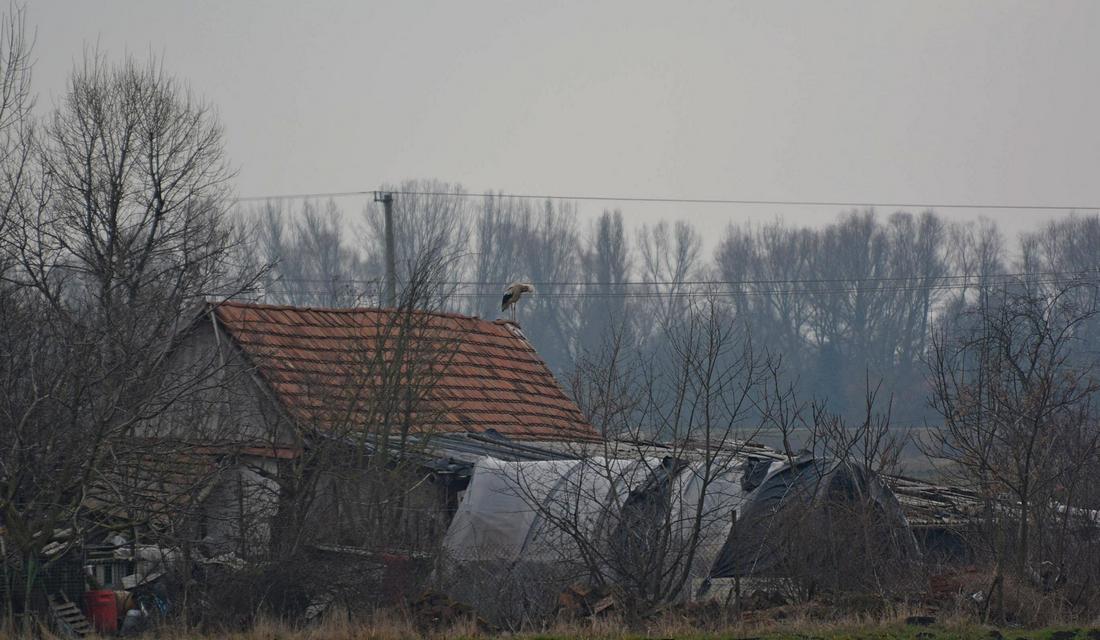 Igor a Csicsei-tanyára költözött be télre (fotó: Papp Ferenc)