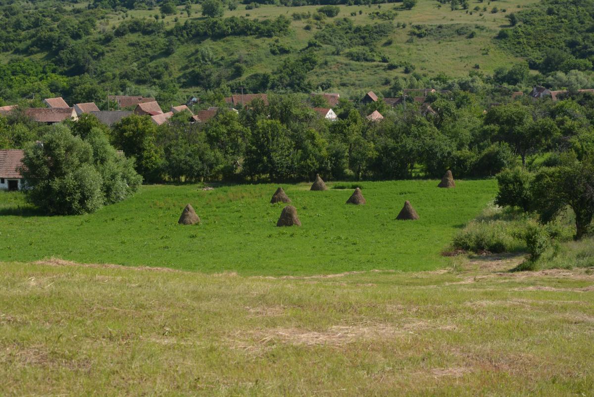 Omlás kaszáló - még sincs gólya a faluban (fotó: Papp Ferenc)