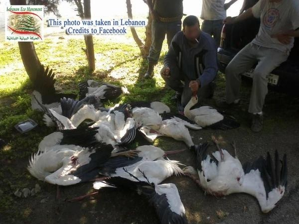 """Gólyavadászok, Libanon - """"a lényeg: jó nagyot, sokat lőttem!"""" forrás: www.wildlifeextra.com"""