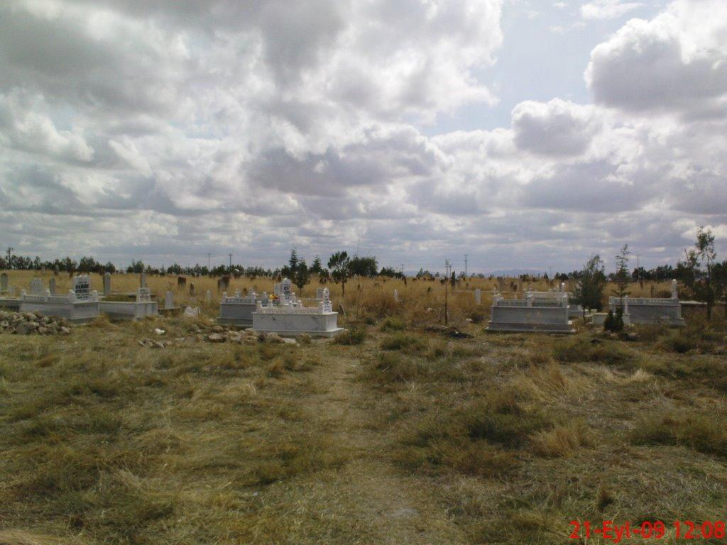 Türkmenmecidiye temetője – vegetáció ősszel (fotó: Icould)