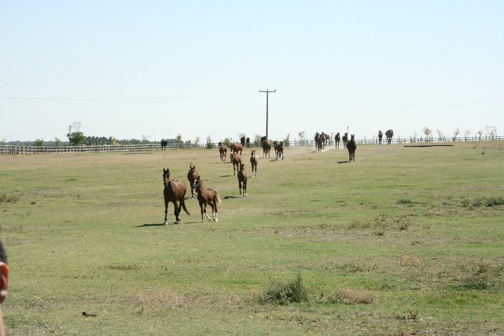 Állattartásnak köszönhetően van hol pihenni, megállni - lovak egy közeli, hasonló gyepen (fotó: crayz boyy)