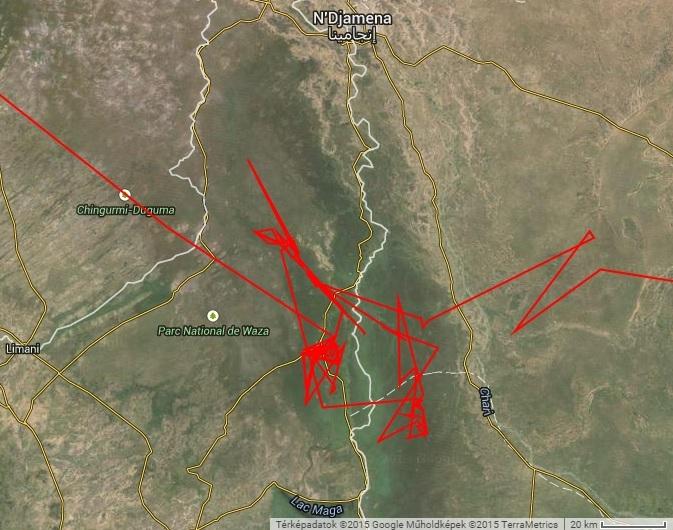 Varbó mozgása 2014 telén Logone folyó mentén (forrás: satellitetracking.eu)