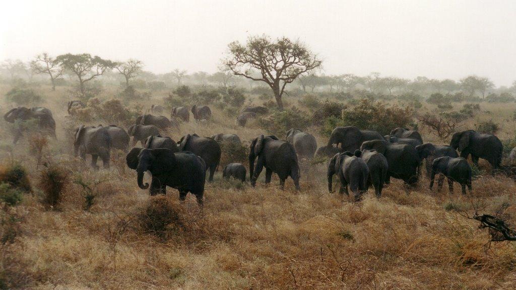 Logone folyó csádi oldalán is élnek elefántok (fotó: mark12)