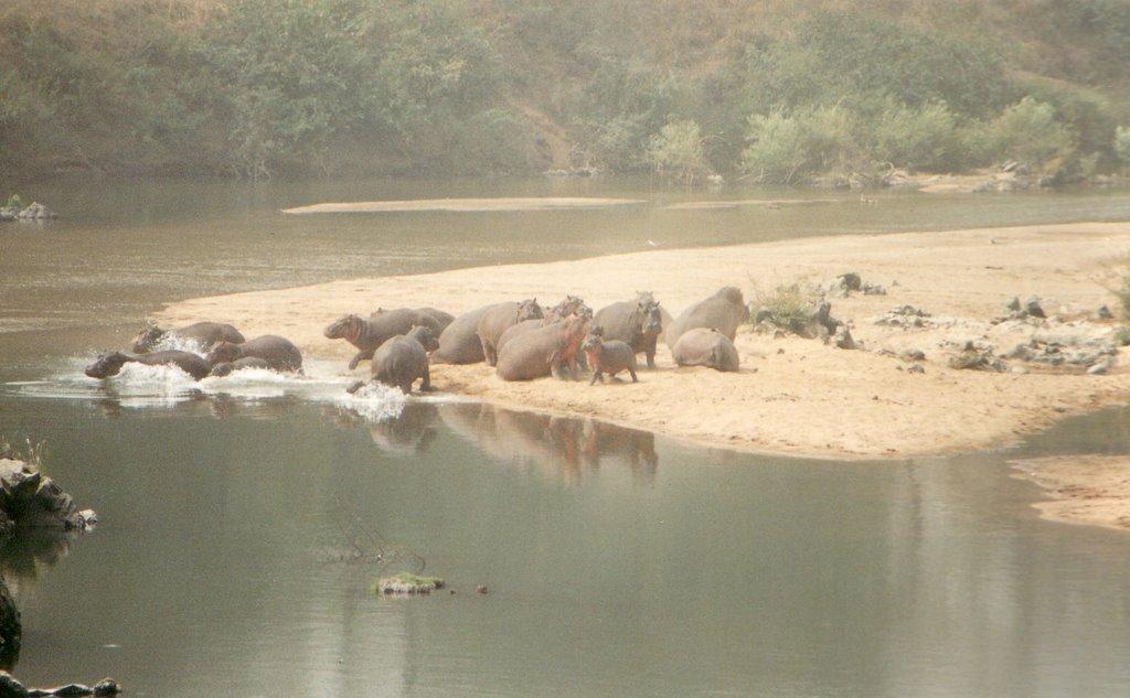 Logone folyóban vízilovak is élnek (fotó: mark12)