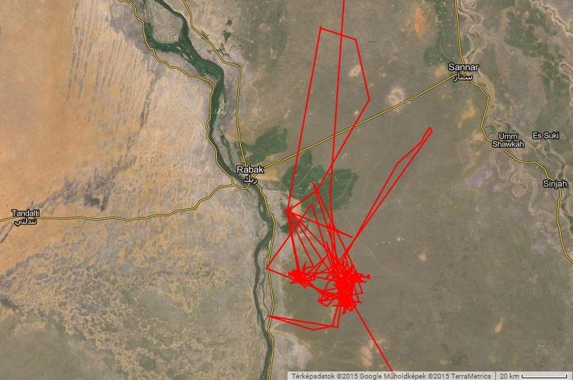 2015 január-február Veca Rabak mellett, a Fehér-Nílus völgyében telel (forrás: satellitetracking.eu)