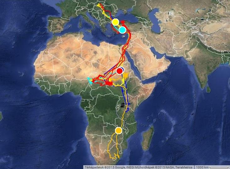 Vonuló gólyáink helyzete 2015. március 23-án, északra tartanak; Veca sárgával, Varbó türkizzel, Horka kékkel, Natália pirossal, Picur narancssárgával jelölve (forrás: satellitetracking.eu)